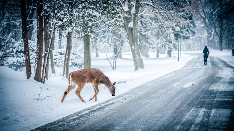 10 Best Winter Scenes For Desktop FULL HD 1080p For PC Desktop 2020 free download winter scenes desktop backgrounds sf wallpaper 800x450