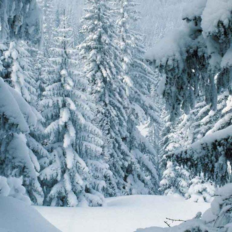 10 Best Free Winter Scene Wallpaper FULL HD 1920×1080 For PC Desktop 2018 free download winter scenes free winter desktop wallpaper winter scene uploaded 3 800x800