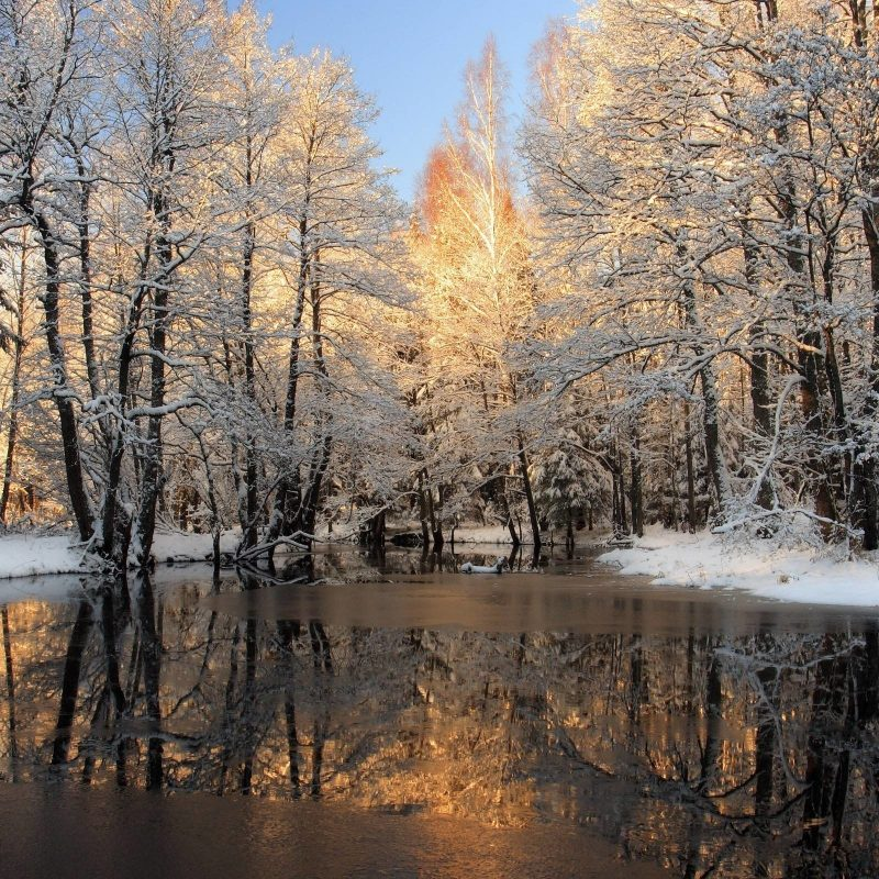 10 Most Popular Winter Nature Scenes Wallpaper FULL HD 1920×1080 For PC Background 2021 free download winter scenes wallpaper 55 images 800x800