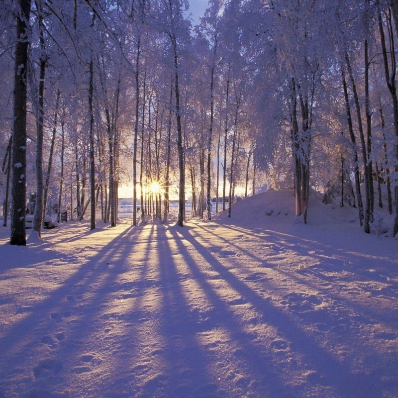 10 New Winter Wonderland Screensavers Free FULL HD 1080p For PC Desktop 2018 free download winter screensavers and wallpapers wallpaper cave 2 800x800