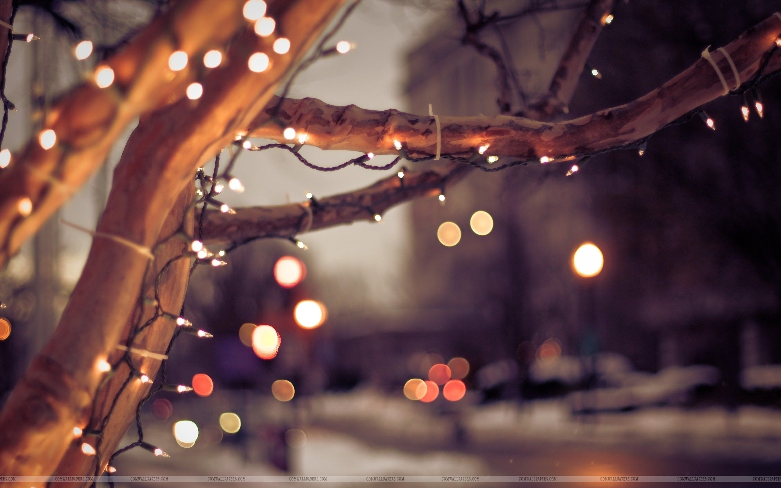 winter tree lights christmas wallpaper | christmas hd wallpapers