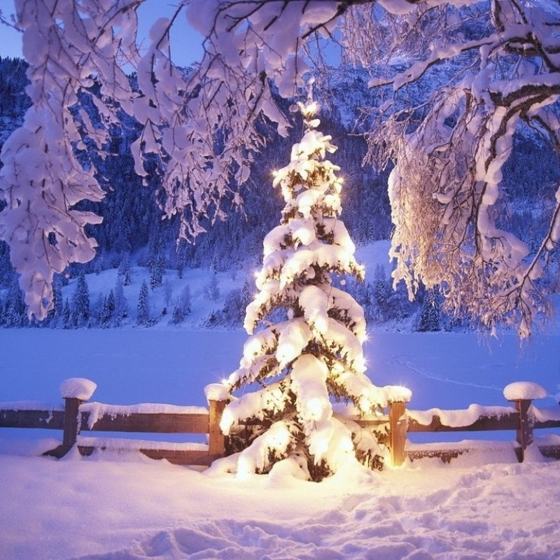 10 Best Free Winter Holiday Desktop Wallpaper FULL HD 1080p For PC Desktop 2018 free download winter winter december nature christmas holiday fence decoration 800x800