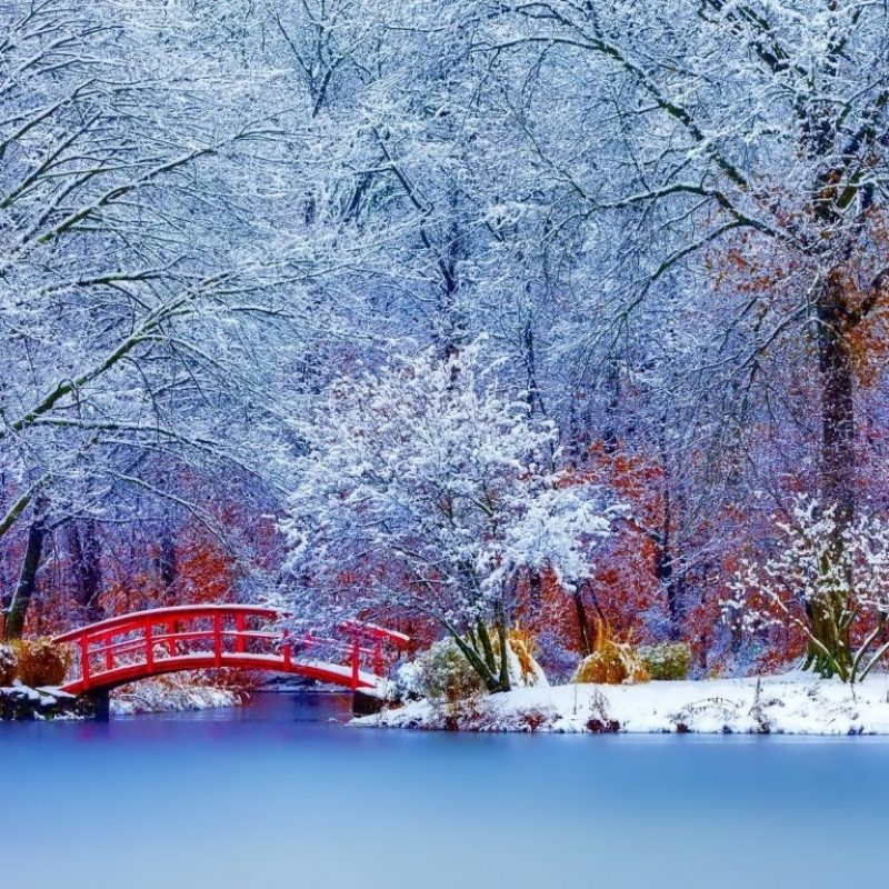 10 Most Popular Winter Nature Scenes Wallpaper FULL HD 1920×1080 For PC Background 2021 free download winter winter nature trees snow wallpaper desktop scenes for hd 16 800x800