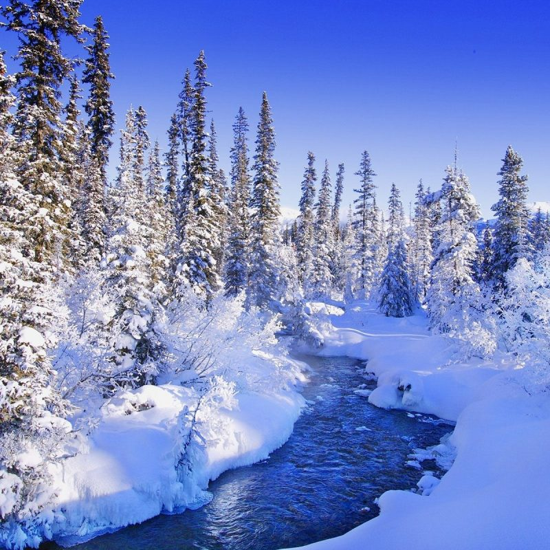 10 Most Popular Winter Wonderland Wallpaper Desktop FULL HD 1080p For PC Background 2018 free download winter winter wonderland daylight white sky cold water trees nature 800x800