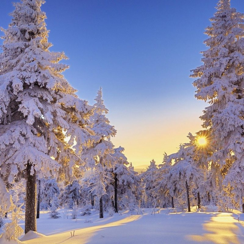 10 Latest Winter Wonderland Background Pictures FULL HD 1080p For PC Background 2018 free download winter wonderland desktop backgrounds gallery 72 plus pic 800x800