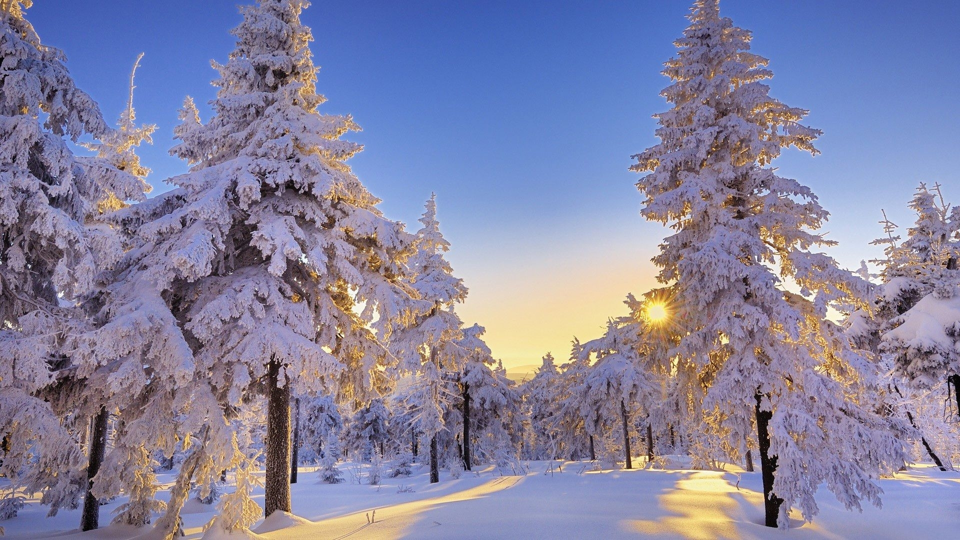 10 Latest Winter Wonderland Background Pictures FULL HD ...