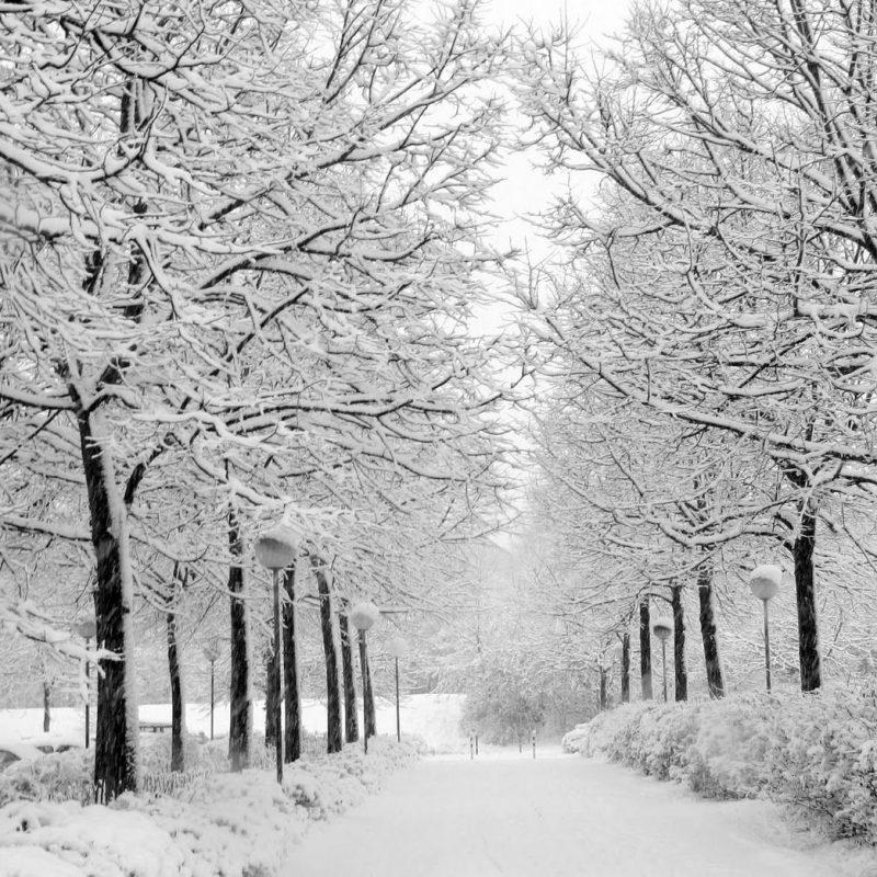 10 Latest Winter Wonderland Backgrounds For Desktop FULL HD 1080p For PC Desktop 2020 free download winter wonderland desktop wallpapers gallery 68 plus pic 1 800x800