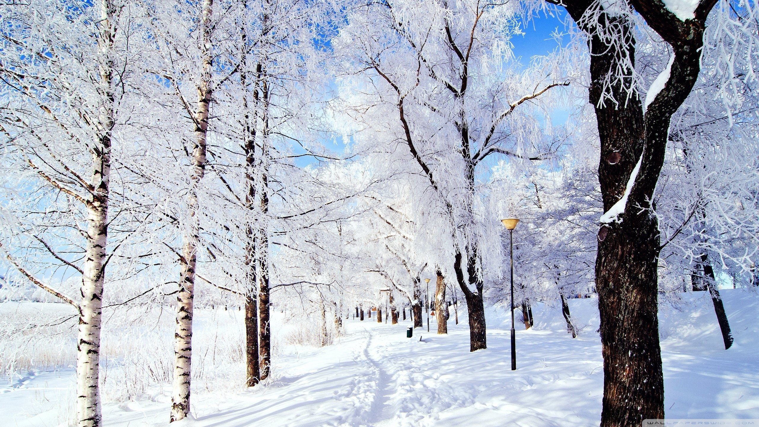winter wonderland ❤ 4k hd desktop wallpaper for 4k ultra hd tv