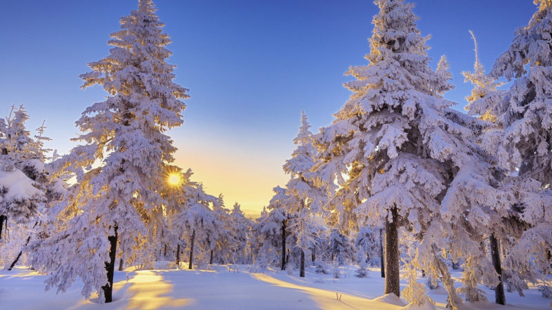 10 Latest Winter Wonderland Wallpaper Hd FULL HD 1080p For PC Desktop 2020 free download winter wonderland hd wallpapers this wallpaper 800x450