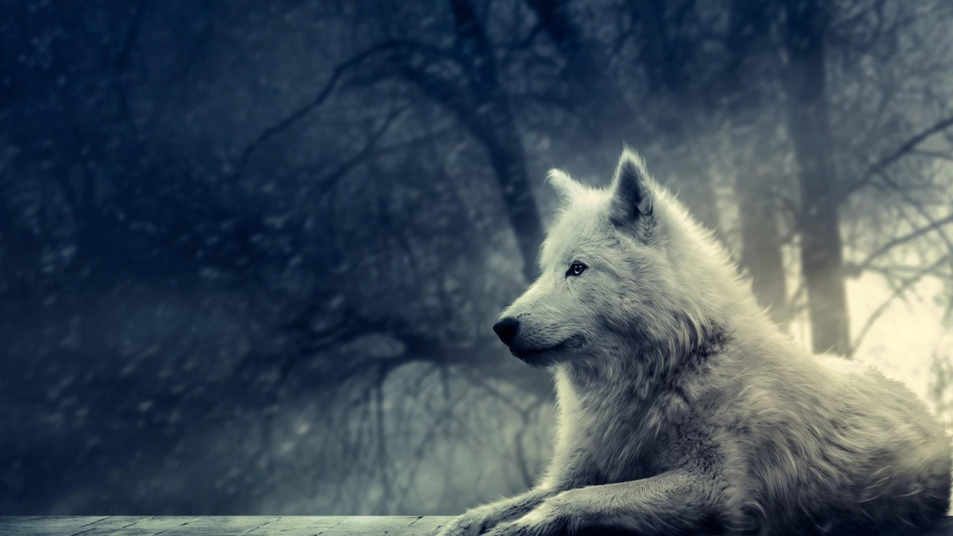 wolf desktop backgrounds pictures - wallpaper cave