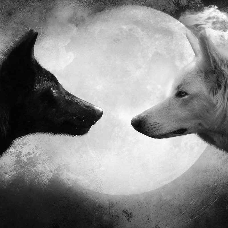 10 Top Black And White Wolves Together Wallpaper Full Hd