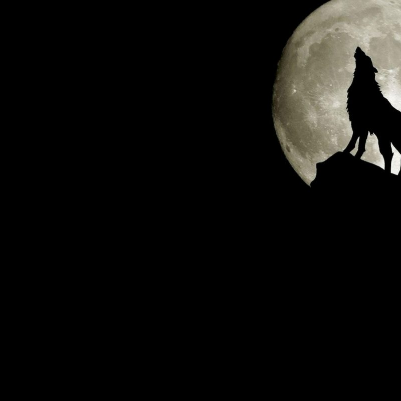 10 Latest Black Wolf Wallpaper Hd FULL HD 1920×1080 For PC Desktop 2018 free download wolf howling at full moon desktop wallpaper 800x800
