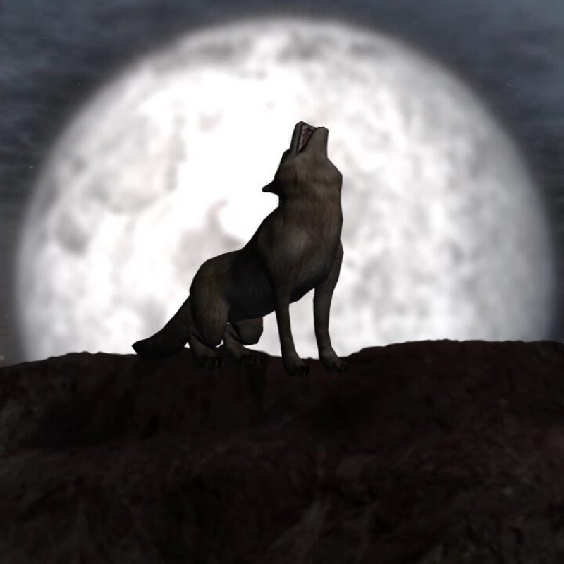 10 Latest Werewolf Howling At The Moon Pictures FULL HD 1080p For PC Desktop 2020 free download wolf howling at full moon individual elements on green screen 800x800