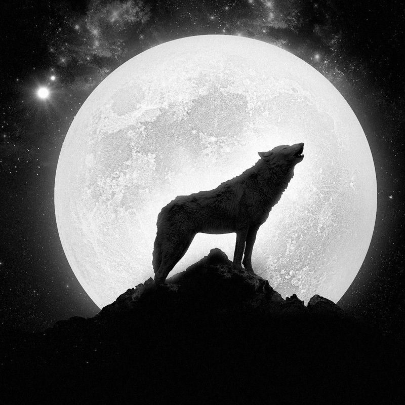 10 Latest Werewolf Howling At The Moon Pictures FULL HD 1080p For PC Desktop 2020 free download wolf howling at the full moon hd wallpaper get it now nature 800x800