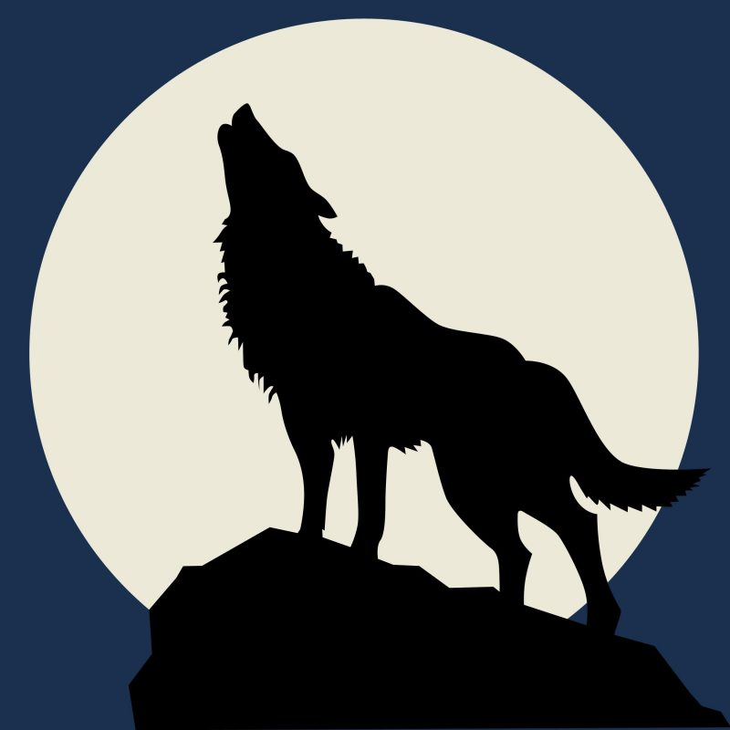 10 Latest Werewolf Howling At The Moon Pictures FULL HD 1080p For PC Desktop 2020 free download wolf howling at the full moon wolf howling stenciling and book 800x800