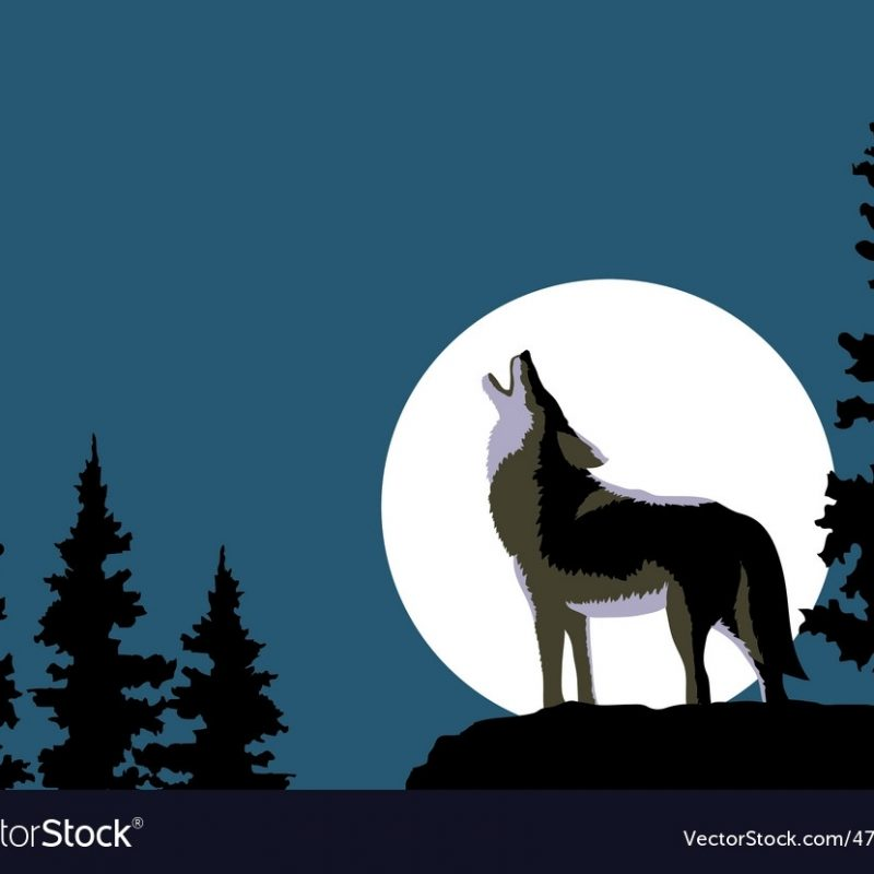 10 Latest Images Of Wolves Howling At The Moon FULL HD 1080p For PC Desktop 2020 free download wolf howling at the moon royalty free vector image 1 800x800