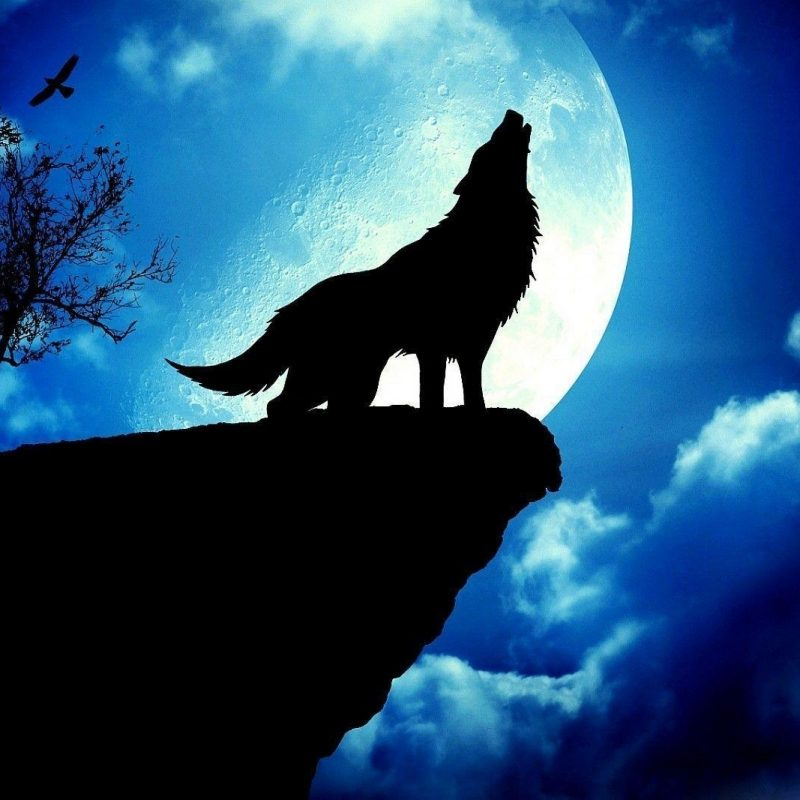 10 Latest Wolf And Moon Wallpaper FULL HD 1080p For PC Desktop 2021 free download wolf howling at the moon wallpapers wallpaper cave 1 800x800