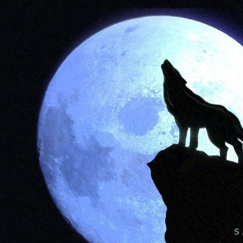10 Latest Werewolf Howling At The Moon Pictures FULL HD 1080p For PC Desktop 2020 free download wolf howling at the moon wallpapers wallpaper cave 3 800x800