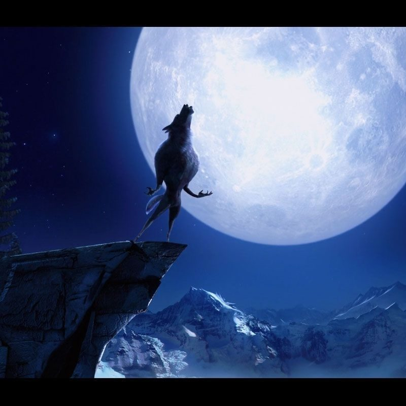 10 Latest Werewolf Howling At The Moon Pictures FULL HD 1080p For PC Desktop 2020 free download wolf howling at the moon wallpapers wallpaper cave best games 1 800x800