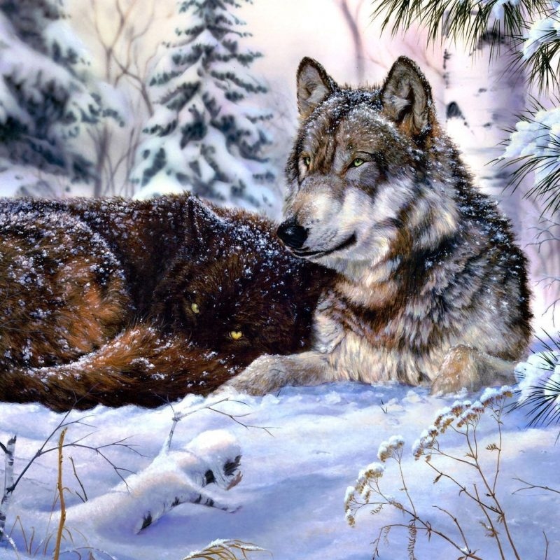 10 Latest Wolves In Snow Wallpaper FULL HD 1920×1080 For PC Background 2018 free download wolf in snow wallpaper digital art wallpapers 47312 800x800