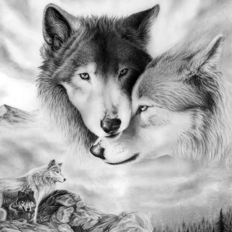10 Top Black And White Wolves Together Wallpaper FULL HD 1080p For PC Background 2021 free download wolf wallpaper 1600x1200 love wallpapers 3d for desktop pictures 800x800