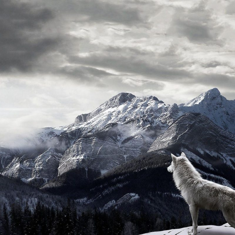 10 Latest Wolf Backgrounds For Desktop FULL HD 1080p For PC Desktop 2018 free download wolf wallpapers 1920x1080 wallpaper cave 2 800x800