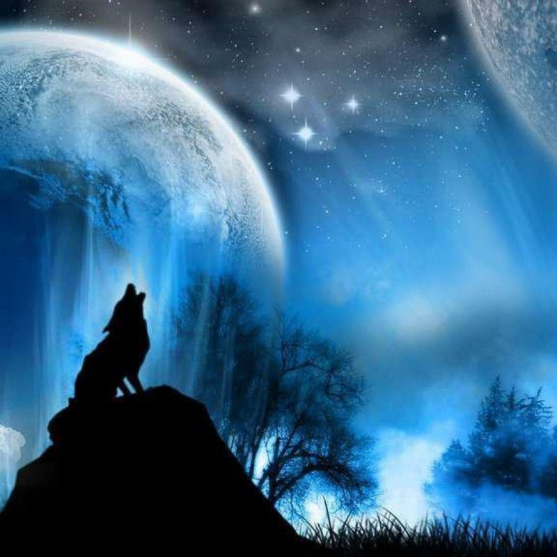 10 Latest Wolf Backgrounds For Desktop FULL HD 1080p For PC Desktop 2020 free download wolf wallpapers free download wallpapers backgrounds images 800x800