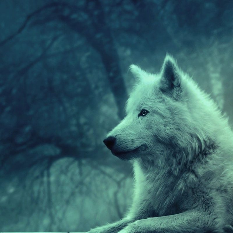 10 New Wolf Wallpaper Hd 1080P FULL HD 1920×1080 For PC Background 2020 free download wolf wallpapers hd group 78 1 800x800