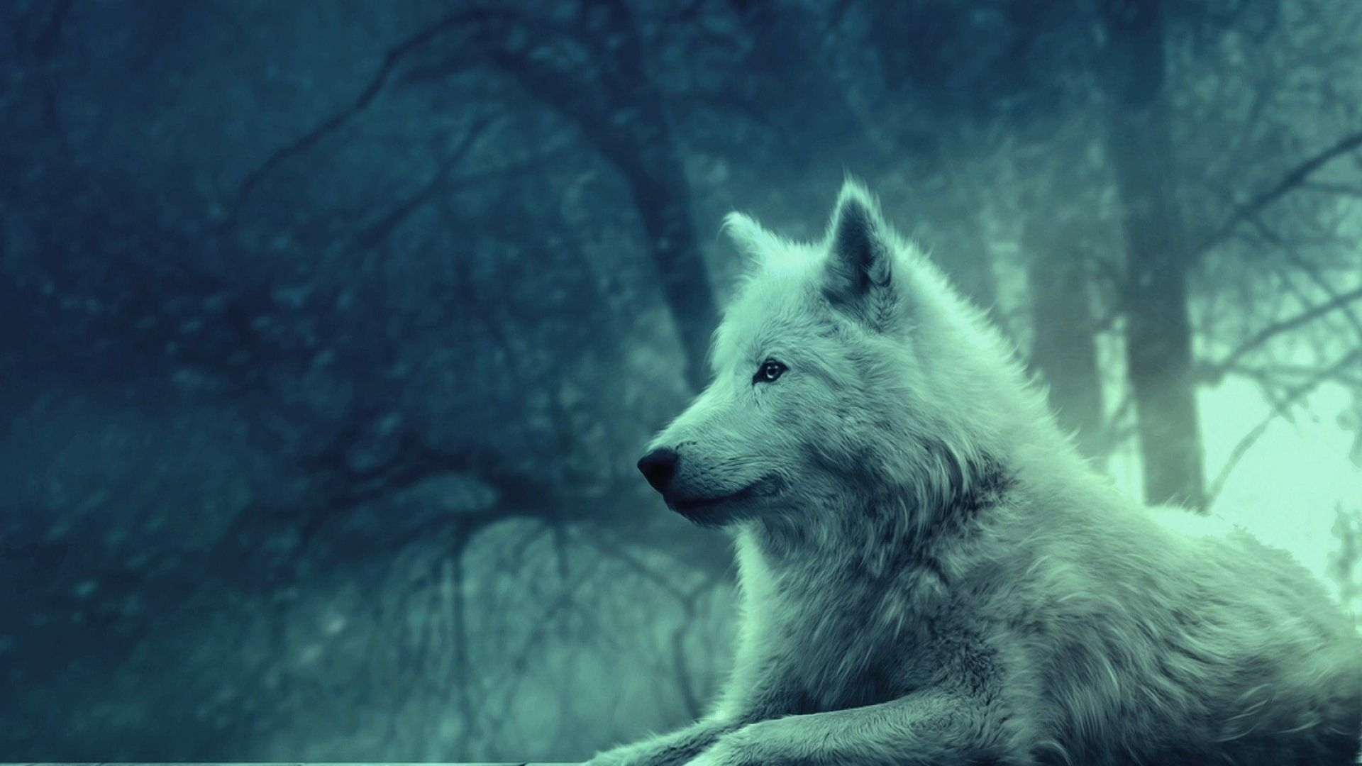 wolf wallpapers hd group (78+)