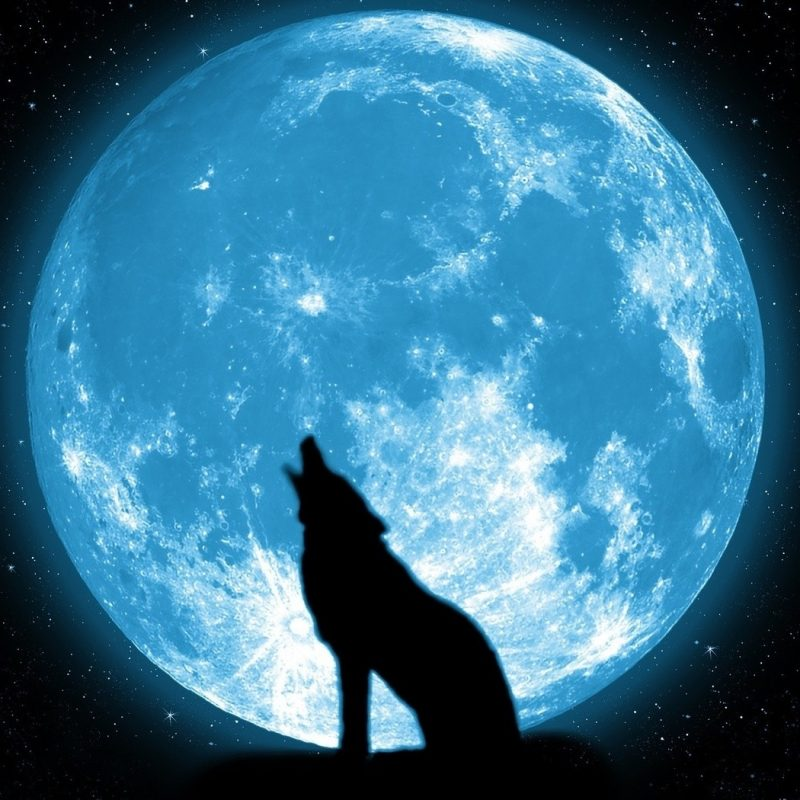10 Best Wolf Howling At The Moon Wallpaper FULL HD 1080p For PC Background 2020 free download wolves howling at the moon wallpaper 51290 open walls 800x800