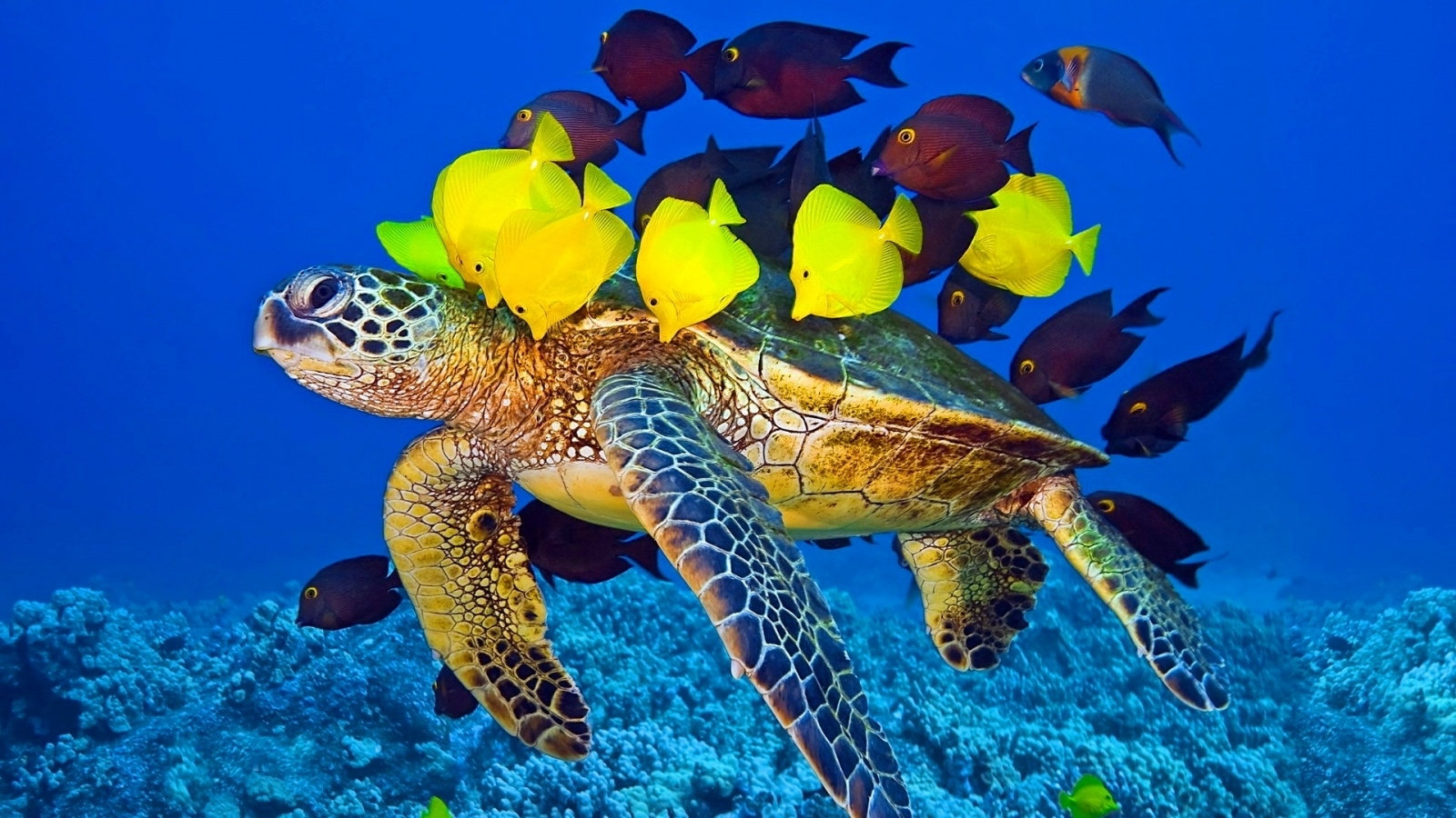 yellow fish and turtle wallpaper for iphone wallpaper | wallpaperlepi