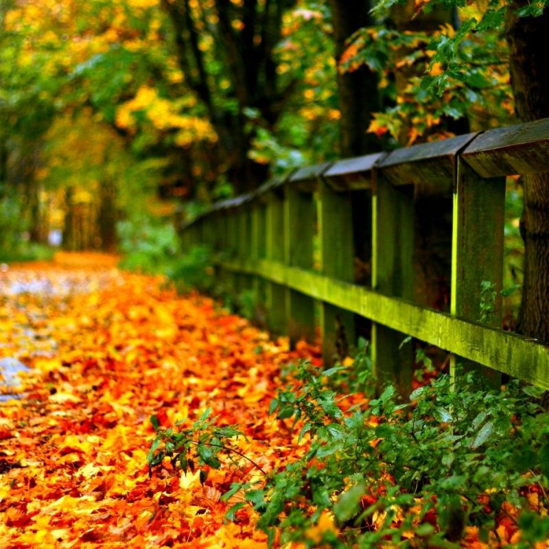 10 Latest Fall Leaves Desktop Background FULL HD 1920×1080 For PC Desktop 2018 free download yellowed autumn leaves hd desktop wallpaper high definition 800x800
