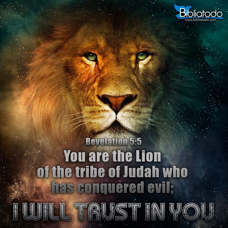 10 Most Popular Lion Of The Tribe Of Judah Pictures FULL HD 1920×1080 For PC Desktop 2021 free download you are the lion of the tribe of judah christian pictures 800x800